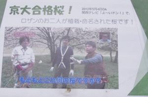 8kyoudaigoukakuzakura2