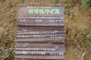 7osarukuizu_0039