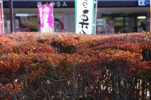 6kounoikesa_0031