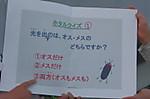 7kamishibai_0037