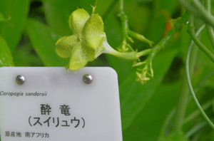 100suiryuu_0296